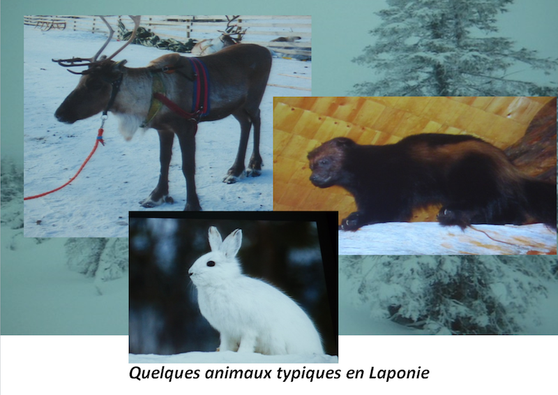 Composition1Animaux